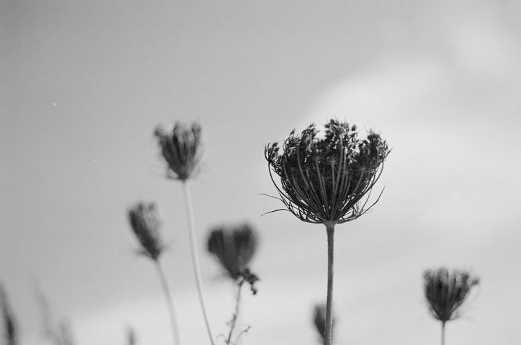 film, photography, blackandwhite - f-delancey | ello