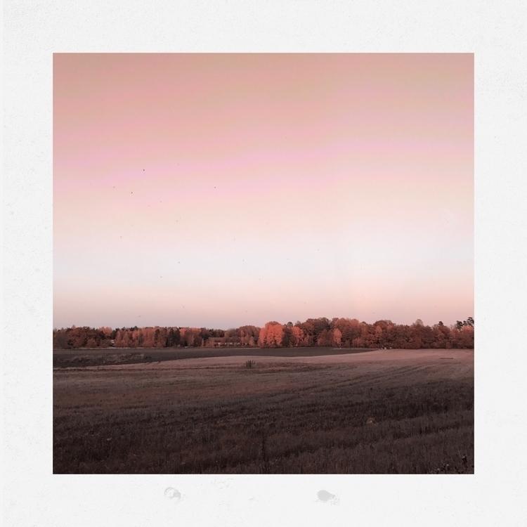 searchlights, dark -Pink - forrest - yogiwod | ello