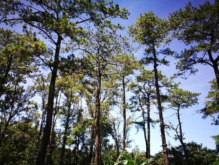 Baguio - bellietaps | ello