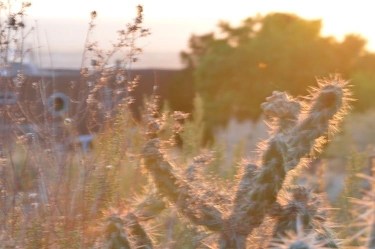 enjoyed sunset local ipa. Plent - kaimei | ello