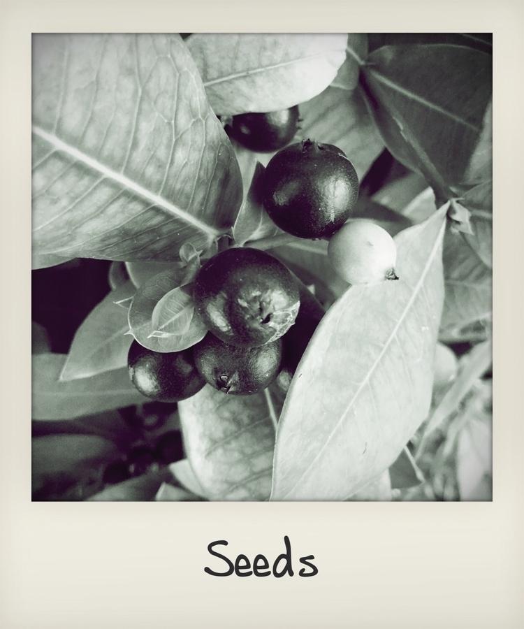 Seeds - mikefl99   ello