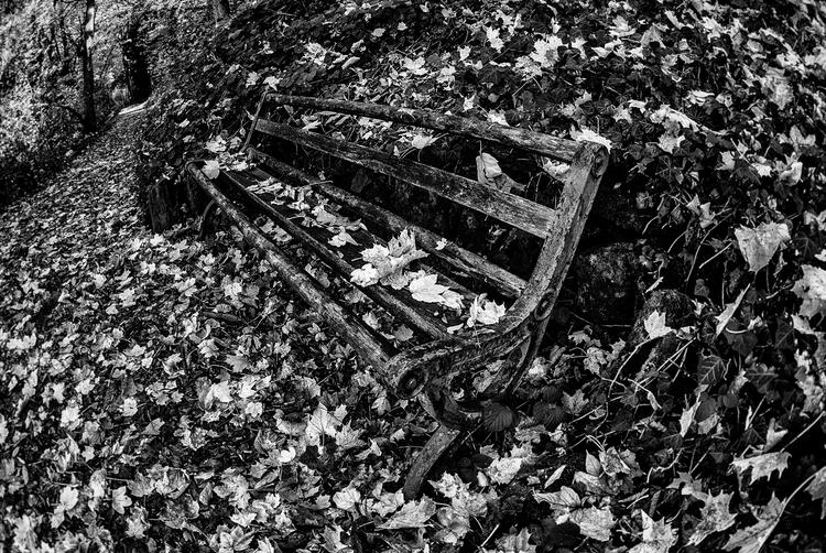 trillions dying - bench, Freiburg - christofkessemeier | ello