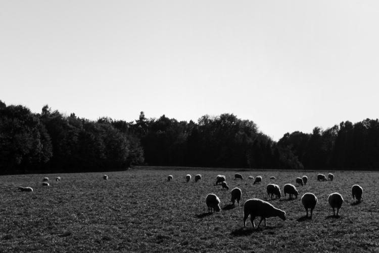 Pasture people - photography, animals - marcushammerschmitt | ello