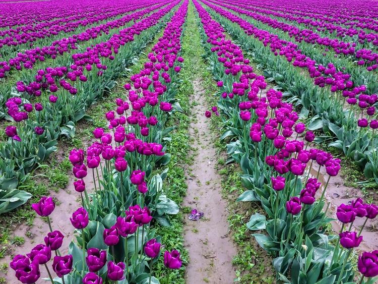Row job count blooms field. cha - davidseibold | ello