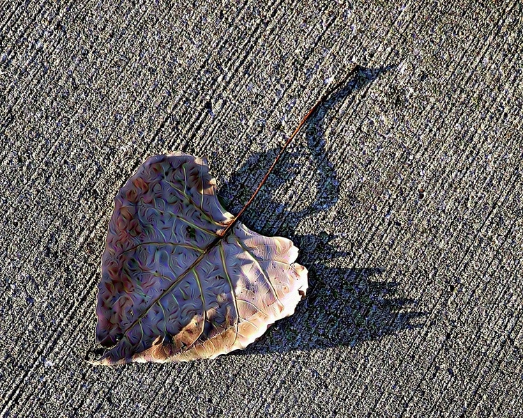 Leaf dreaming swan - photography - kenlong | ello