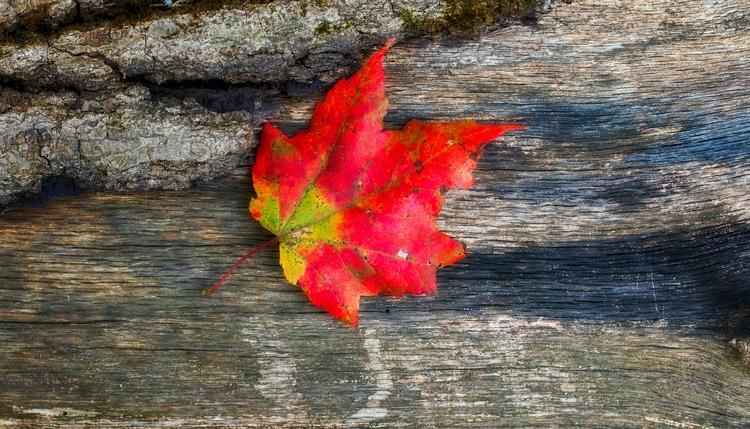 bleak beautiful  - autumn - docdenny | ello