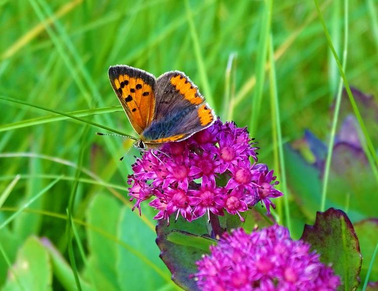 vlinder, Voorschoten - huis-tuin-en-keukenfotograaf | ello