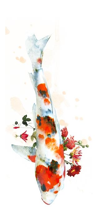 koi - digitalcollage, watercolor - _fiorelaquiroz | ello