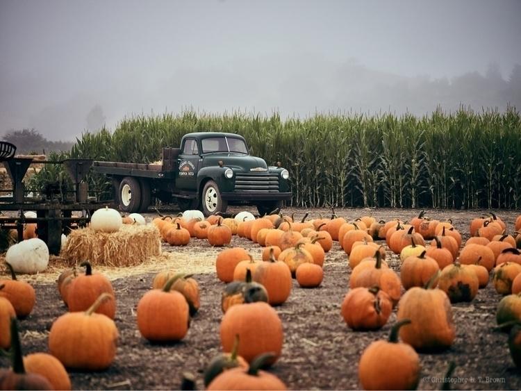 Solvang Pumpkin Patch. love set - tychobrown | ello