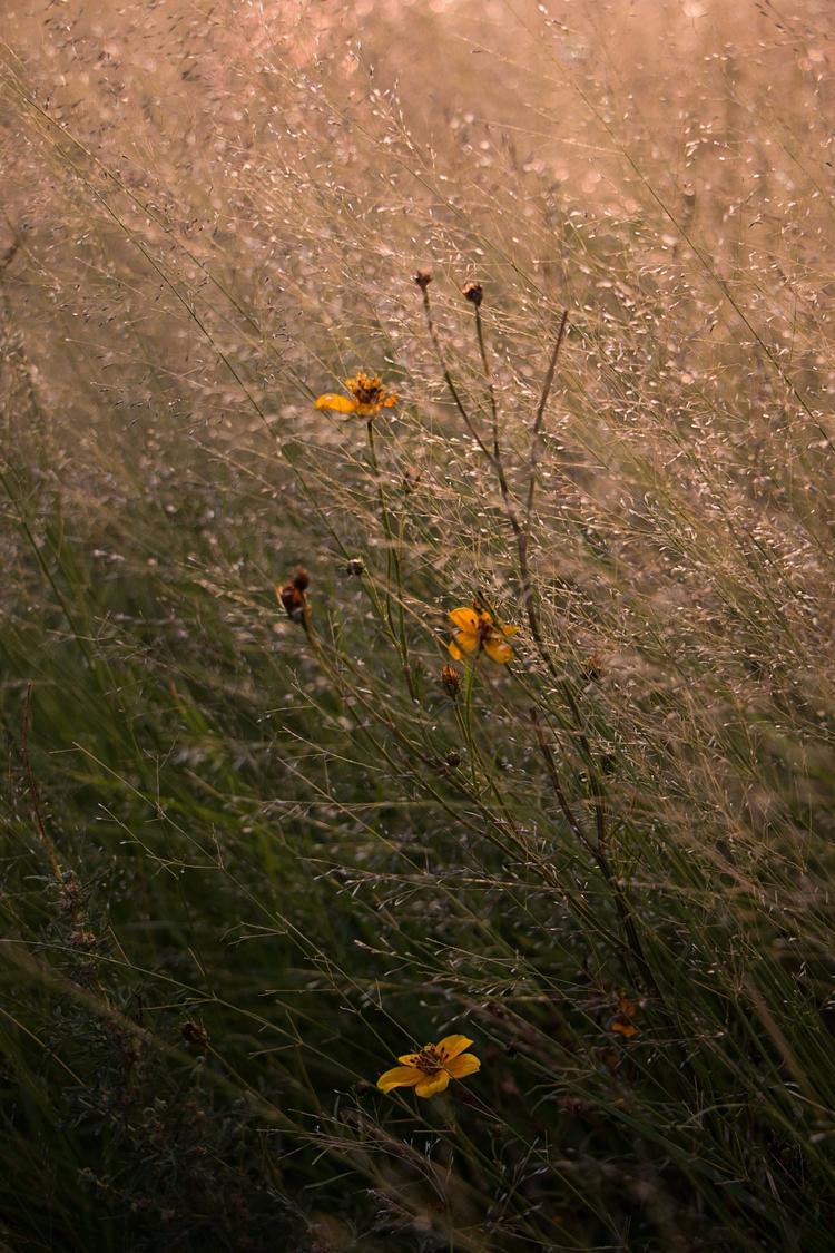Sunrise countryside - nature, flower - yiramos | ello
