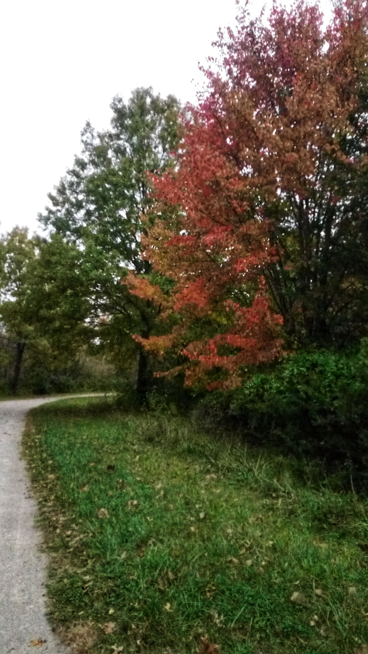 weather changing. Fall arrived - bruceruns   ello
