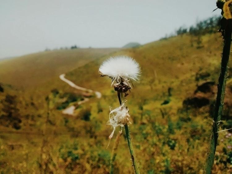Nature, LomasDeLachay, Perú - pieroyacila | ello