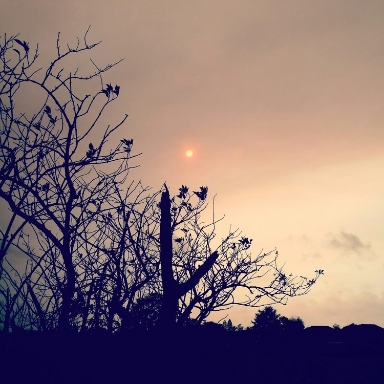 day sky turned yellow sun pinke - estelleclarke | ello