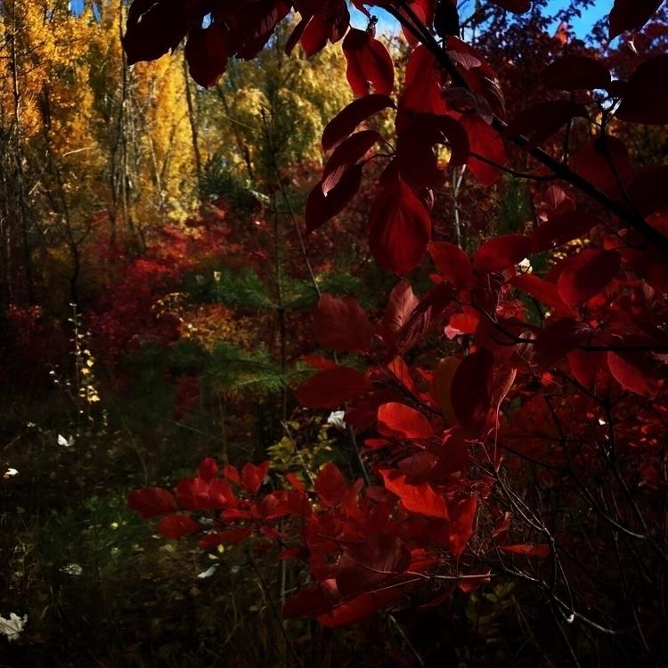 autumn - karapetsahakyan | ello