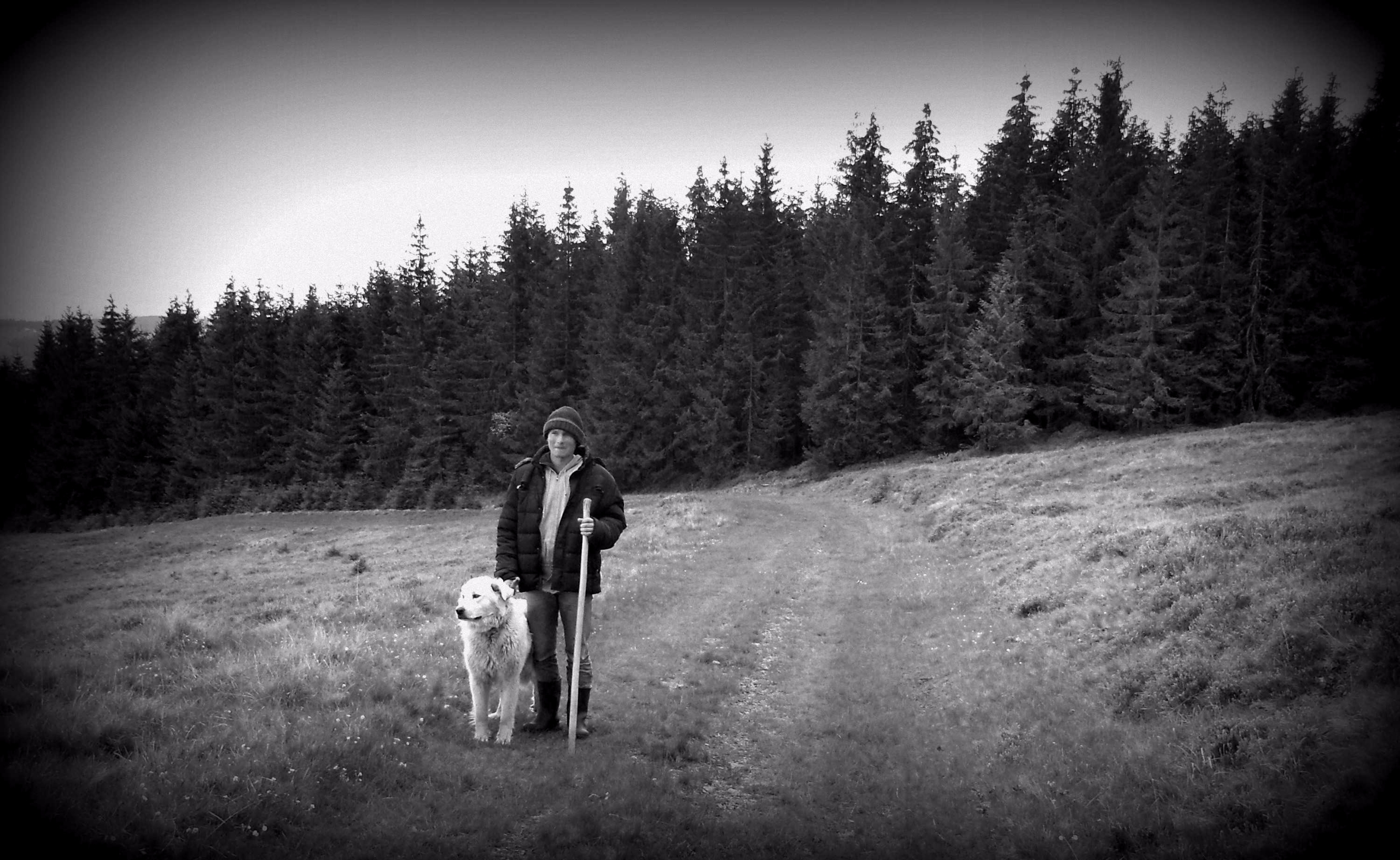 Shepherd dog, common epitome Hu - fondator | ello
