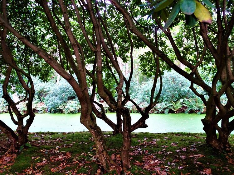 Japanse tuin - huis-tuin-en-keukenfotograaf | ello