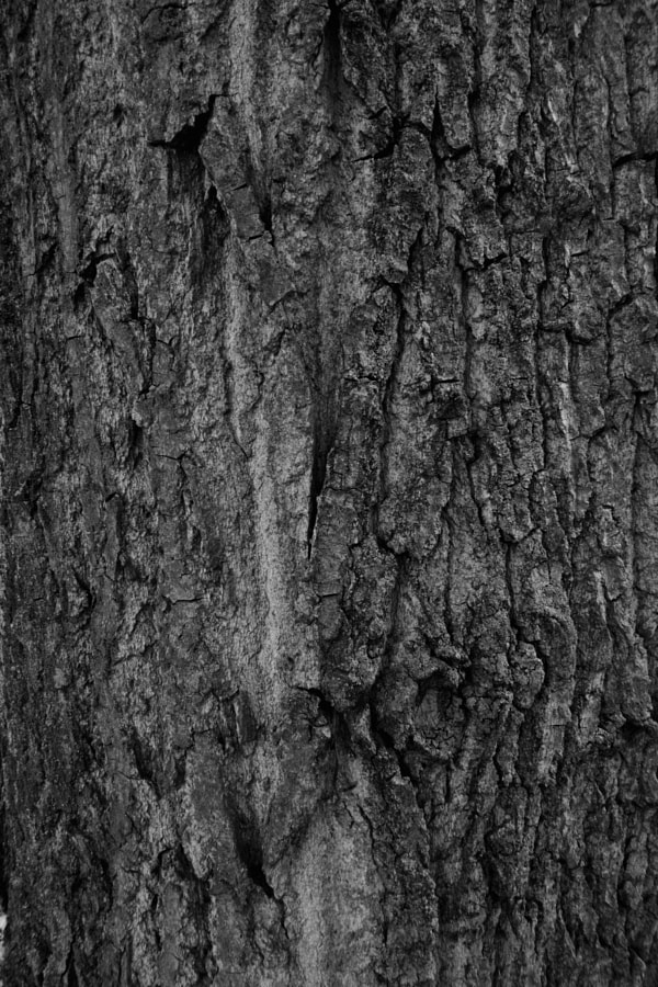 bark - 004, photography, nature - studio_zamenhof | ello