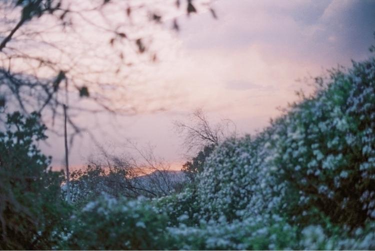 Soft night - shootfilm, film, 35mm - brianne-siegel | ello