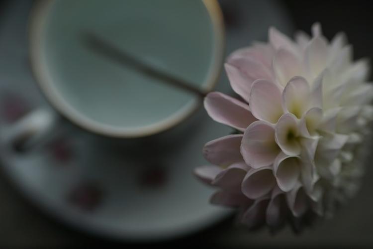 Drink ears - photography, flower - marcushammerschmitt | ello