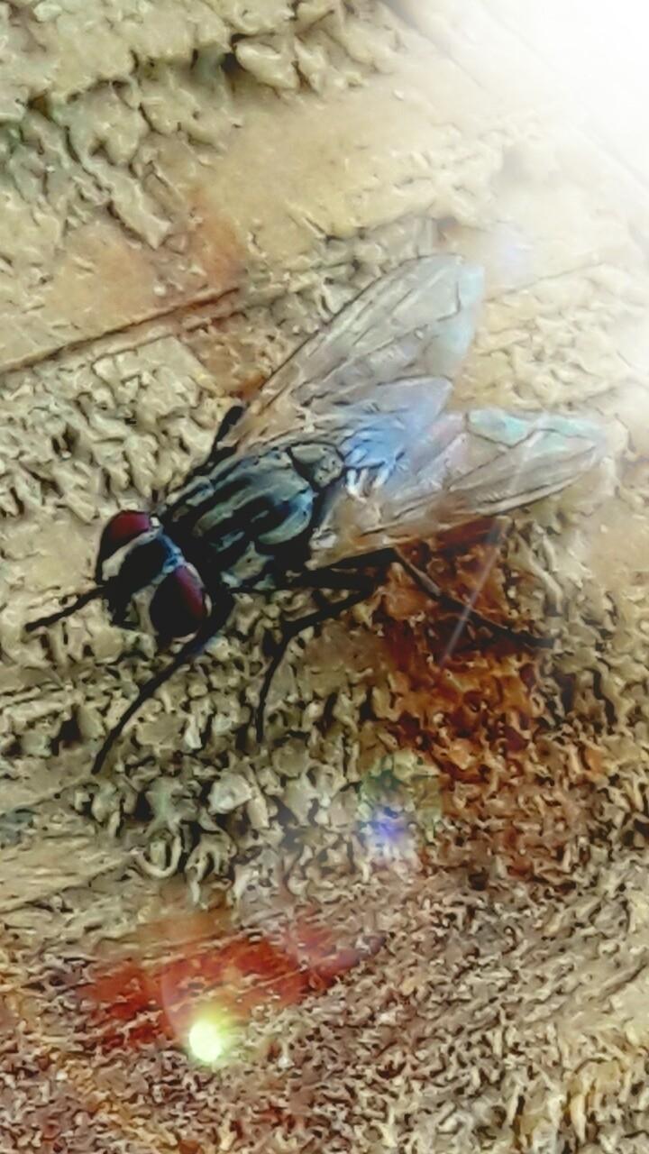 fly - nethanfox | ello