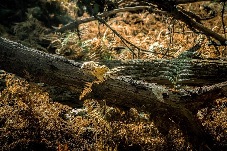 fall, leaves, hiking, exploring - himynameisjimmy | ello