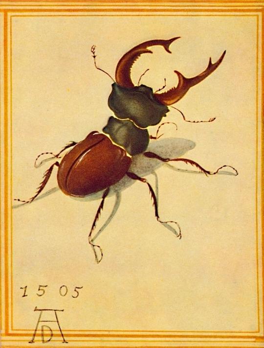 Albrecht Dürer, Stag Beetle, 15 - arthurboehm | ello