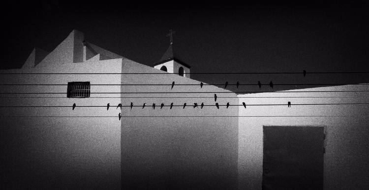 Morning Swallows - photography, monochromatic - elhanans | ello