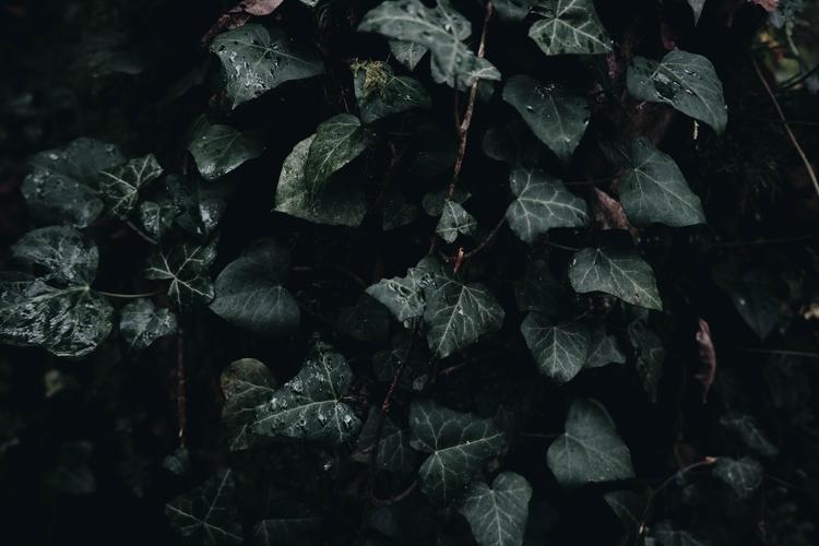 - Petrichor - nature, ivy, plant - blackwyrt | ello