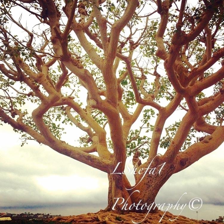 treeoflife#zen#acim#lovethisyogalife#acree#peopleofthetrees#yinyogainspiration#yinyang#newportbeachcalifornia#loveissllthereis - lshefa1 | ello