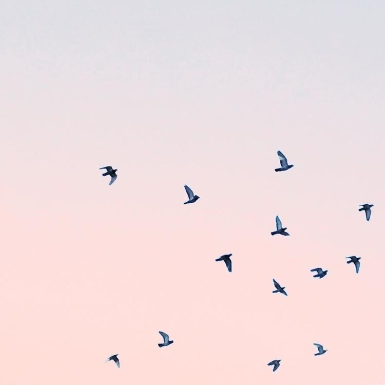 Birds Symphony - anamarques210376   ello