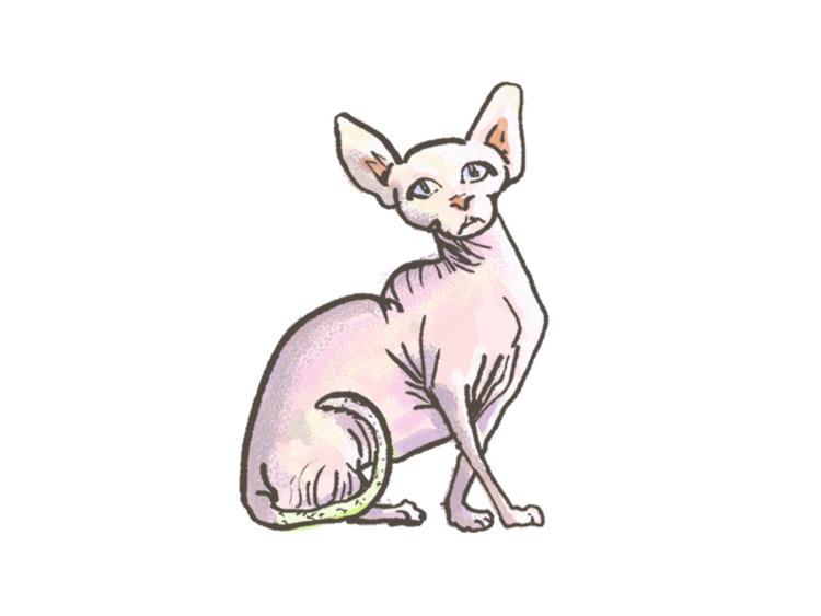 Skin Bag Cat - darumacreative | ello