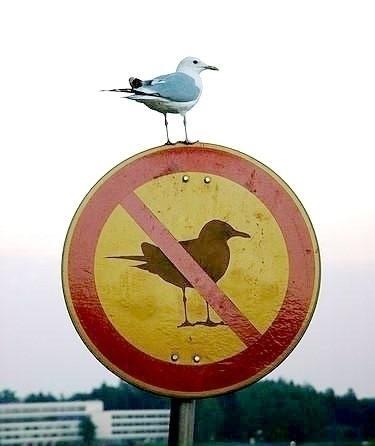 bird - cai_kinghorror | ello