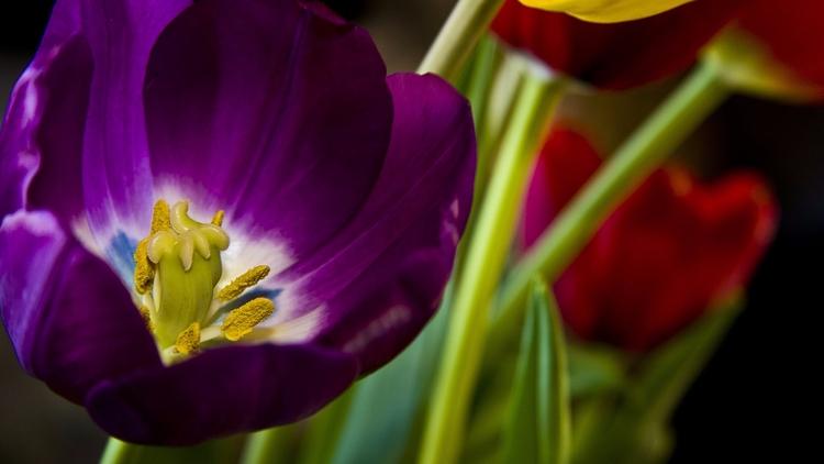 Daily Tulip – News World Thursd - robert-mcangus   ello