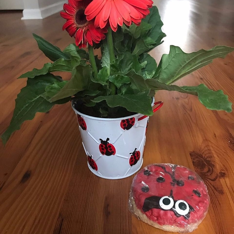 Queen ladybug - cfofresh | ello
