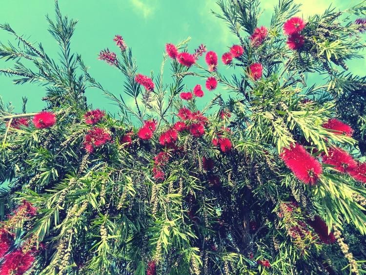 tree, flower, bcn - this_game_has_no_name | ello