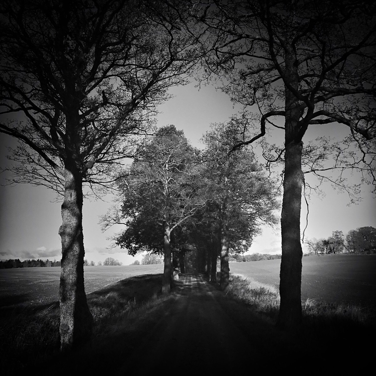 Love Nature forms heart, trees  - yogiwod | ello