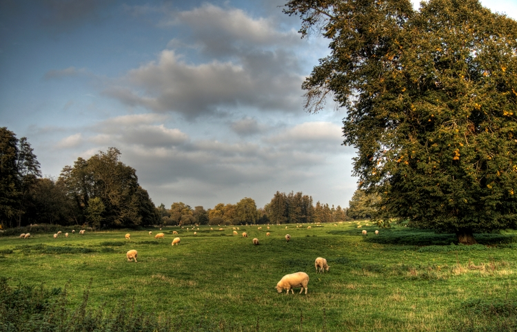 Sheepscape, Winchester love she - neilhoward | ello
