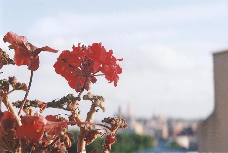 Flowers - chloe_triaire | ello
