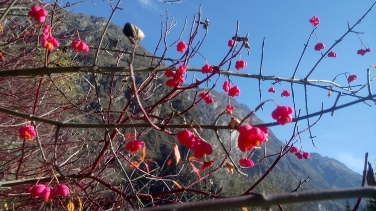 red flowers montains - WANDERINGBOOK - chistinewilmes | ello