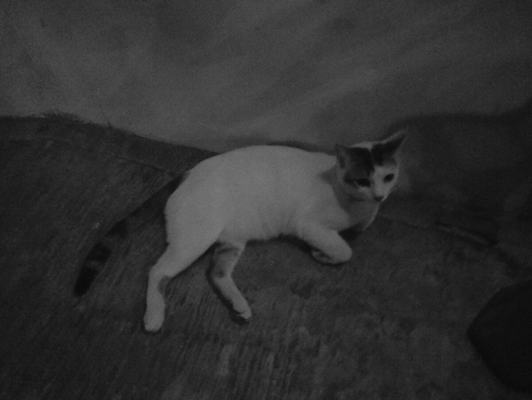 lone cat - blackandwhite - uvha | ello