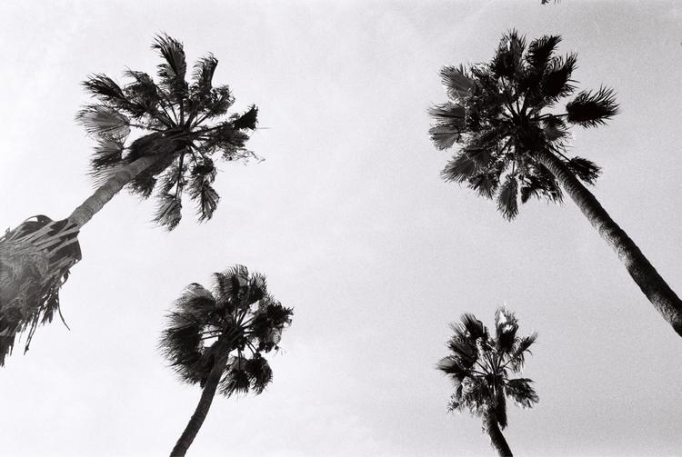 Endless summer - filmphotography - nickcounts | ello