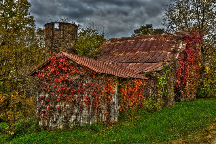Autumn ivy - donwisejr | ello
