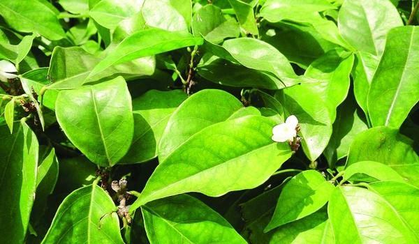 blog focuses Traditional Herbal - aniyaerika | ello