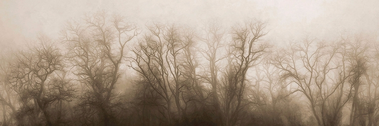 Secrets Trees reveal secrets wi - scottnorrisphotography | ello