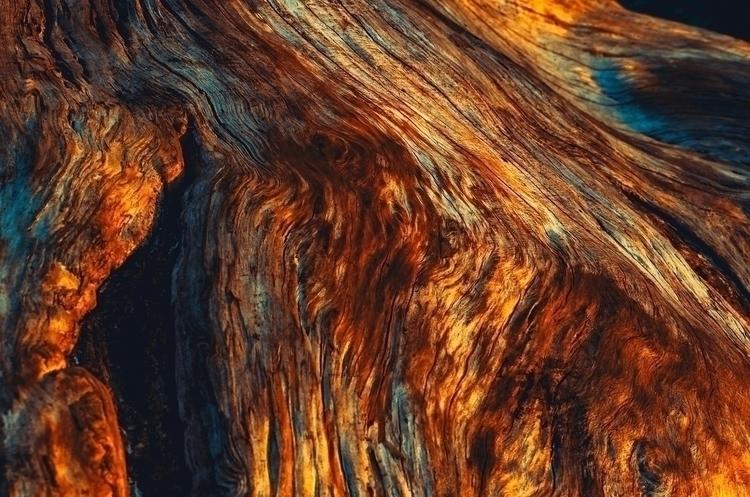 Peeled pine roots' textures glo - afxstudio | ello