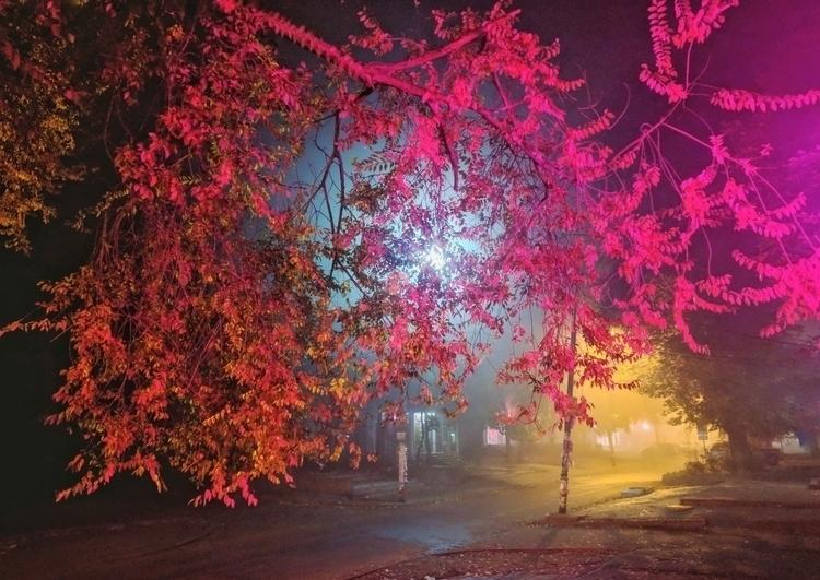 light, night, colour - oblepiha | ello