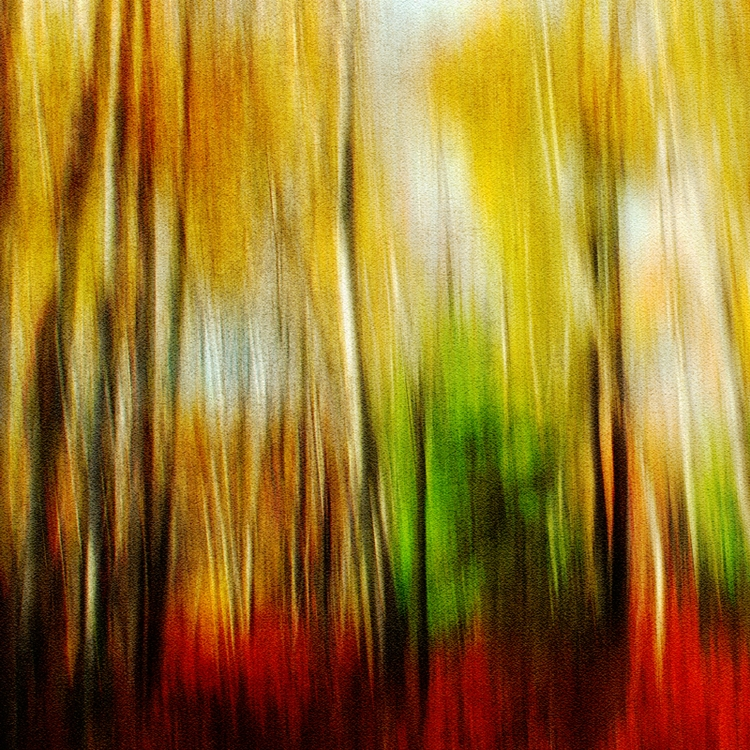 Birch Beech GER, 2017 - photography - pezzido | ello