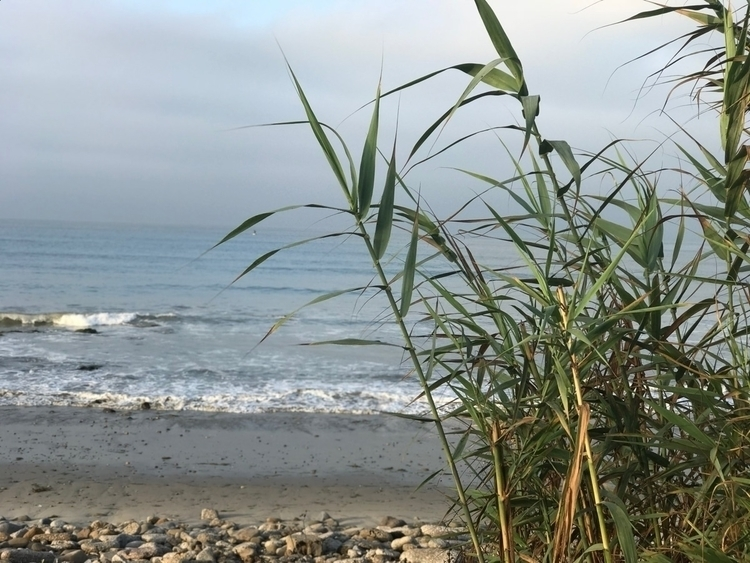 Malibu, CA - ref0rmated | ello