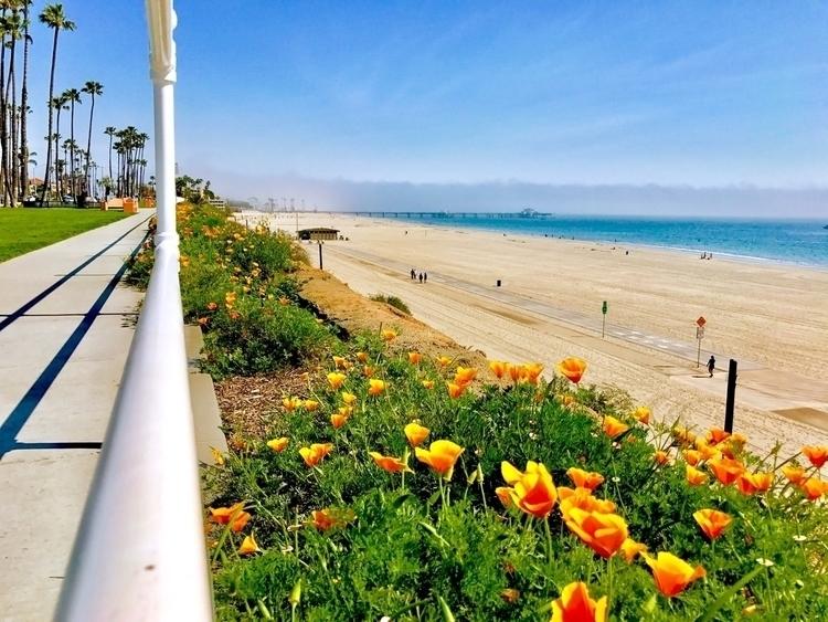 Los Alamitos , Long Beach, CA - ref0rmated | ello