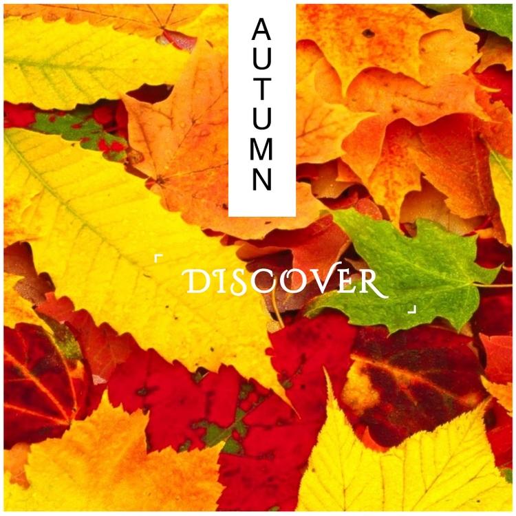 AUTUMN follow - autumn, picoftheday - hermitagluxury | ello